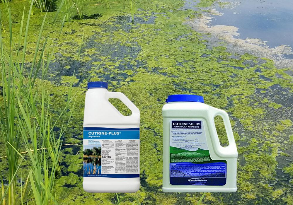 Cutrine-Plus Granular Algaecide Applied Biochemists