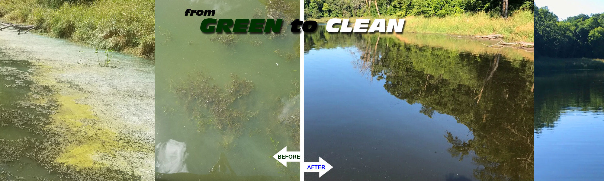 green to clean pond transformations